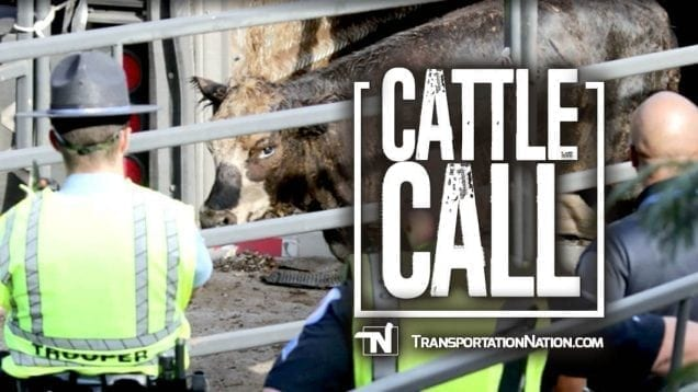 Cattle Call-2
