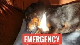 EMERGENCY!!! Please help us!
