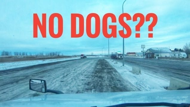 My Trucking Life – NO DOGS ALLOWED!! – #1614