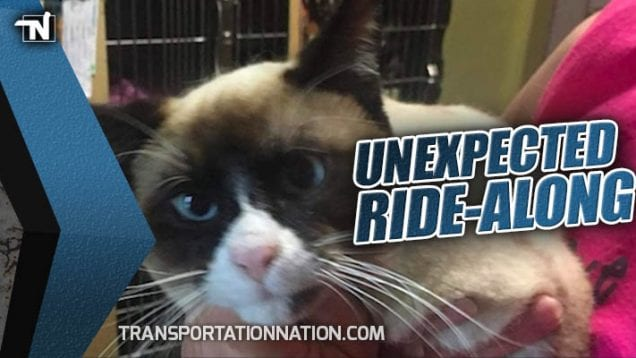 Snowshoe Cat Hitches a Ride on a Semi Truck
