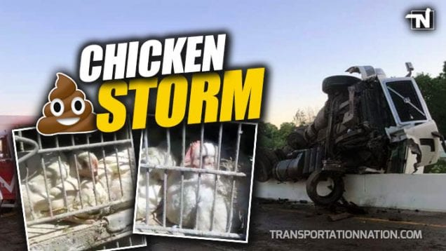 Chicken Storm – Truck Driver Hauling Chickens Falls Asleep and Goes Over a Bridge