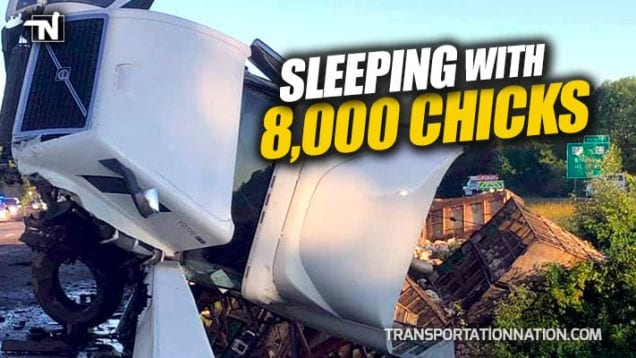 Sleeping with 8000 Chicks – Truck Driver Hauling Chickens Falls Asleep and Goes Over a Bridge