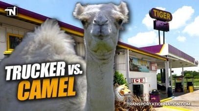 Trucker Bites Camels Testicles at Truck Stop in Louisiana